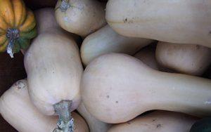 Butternut-Squash-1-Your-Farm-2008-Nov-by-Lisa