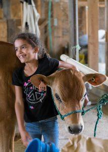 Cobb Hill Open Farm Week, cow credit Molly Drummond (5)